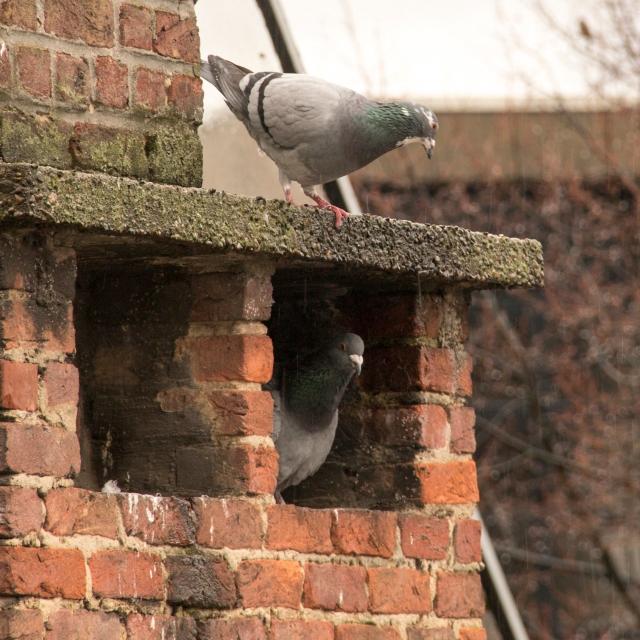 elsbethfotografie duiven schuilen