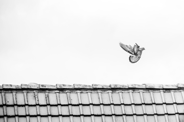 elsbethfotografie Elsbeth Neyens vogelen fotografie .jpg