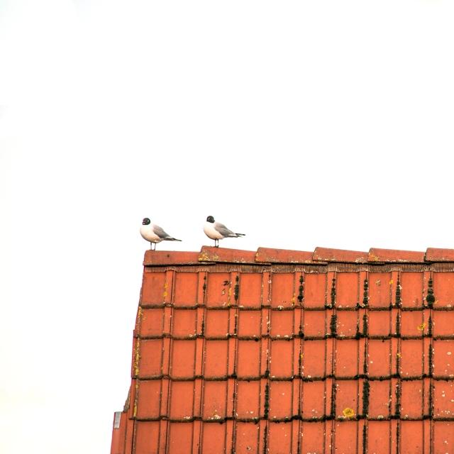 elsbethfotografie elsbethfotografie.com elsbeth neyens vogels